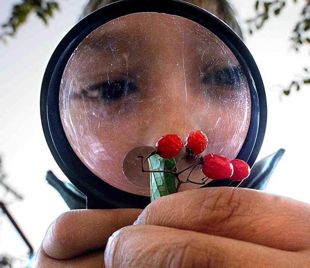 Früchte unter der Lupe. Foto: LWL/W. Fischer