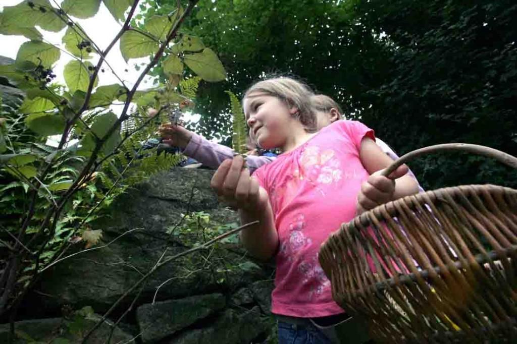 Früchte und Samen sammeln die Teilnehmer des Herbstspaziergangs am Samstag. Foto: LWL/Fischer