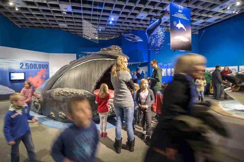 Die Wale-Ausstellung in Münster ist ein großer Erfolg. Foto: LWL/Oblonczyk.