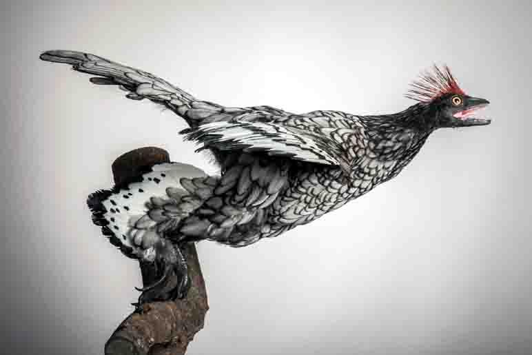 Zahlreiche Modelle von befiederten Dinosauriern wurden für die neue Ausstellung angefertigt, wie hier das Modell des Anchiornis. Foto: LWL/Oblonczyk