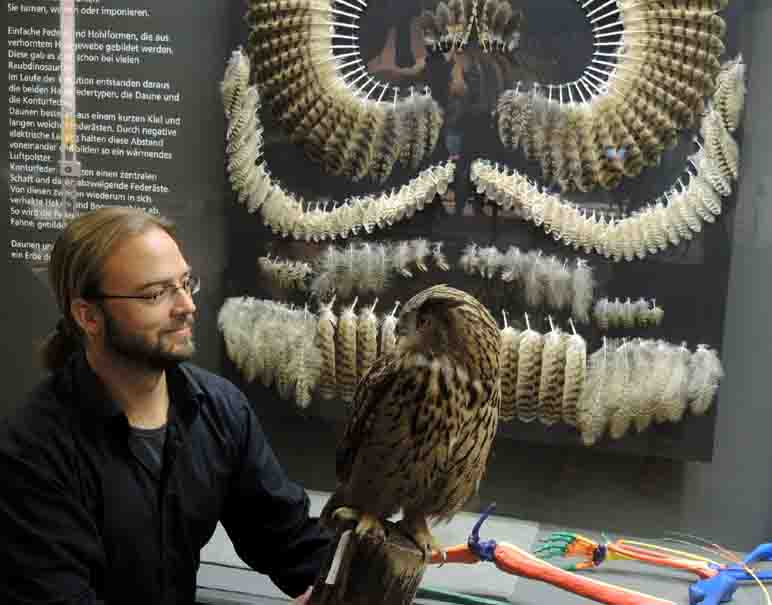 Dr. Jan Ole Kriegs ist Vogelexperte und Kurator am LWL-Museum. Er hat als einer der Ausstellungsmacher die Themen Evolution und Verwandtschaft in der neuen Ausstellung bearbeitet. Foto: LWL/Blumberg