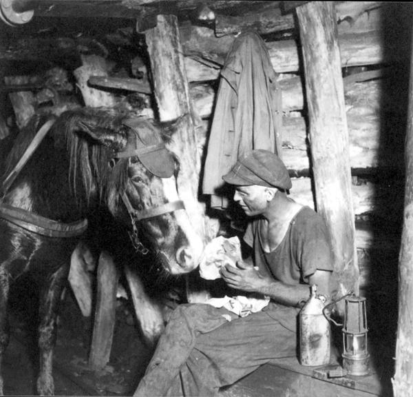 """Bergmann mit Grubenpferd beim """"Buttern"""" auf der Zeche Robert Müser in Bochum-Werne, 1937. Foto: montan.dok"""